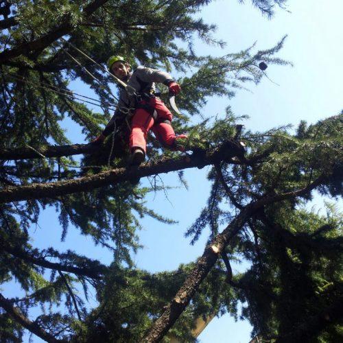 tree-climbing-1