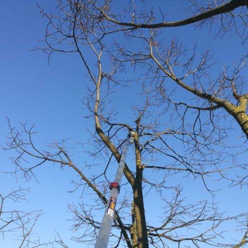 tree-climbing-5