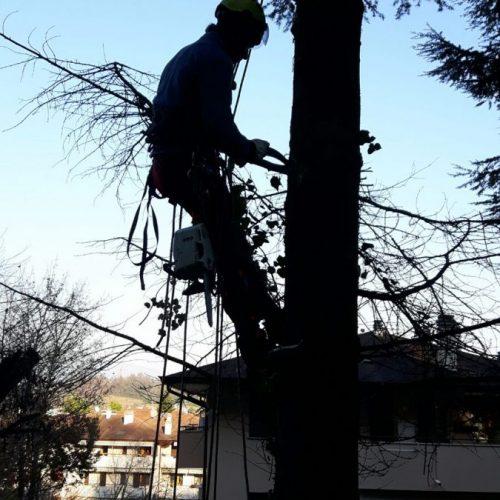 tree-climbing-6