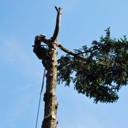 tree-climbing-7