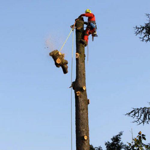 tree-climbing-8